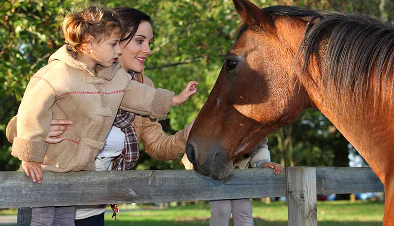 content-horses