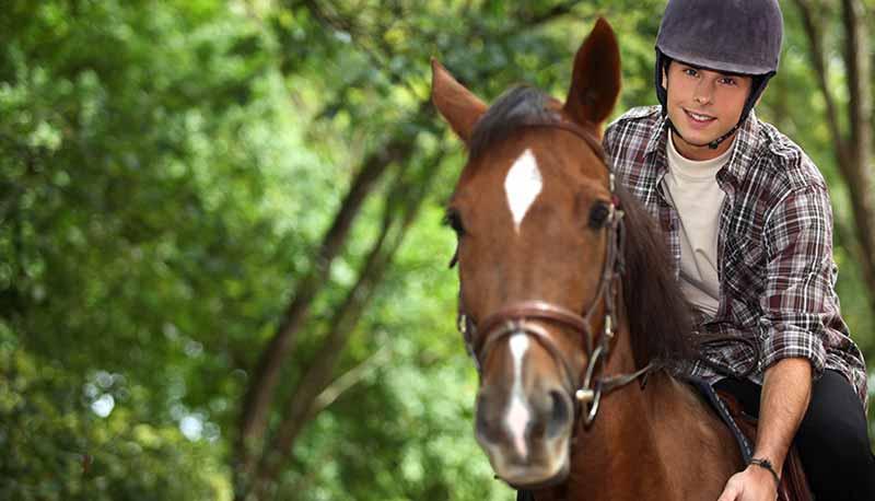 content-horses4